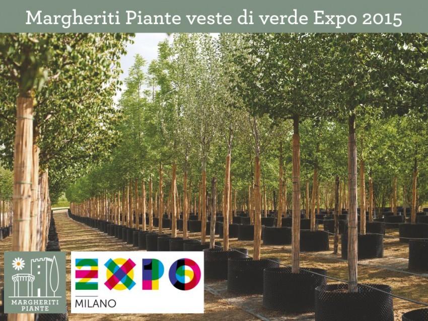 Margheriti Piante veste di verdeEXPO 2015
