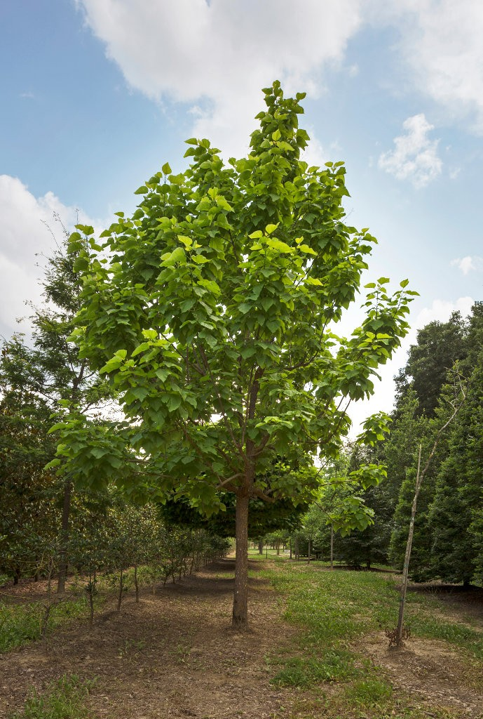Vivai piante da giardino for Catalogo alberi da giardino